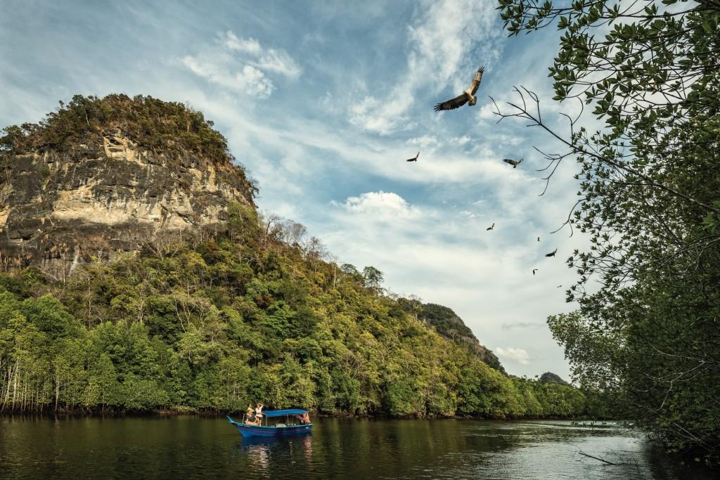 FS mangroves