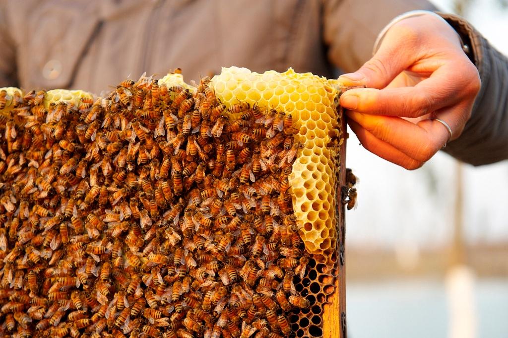 Fairmont Yancheng Lake hive and honeycombs